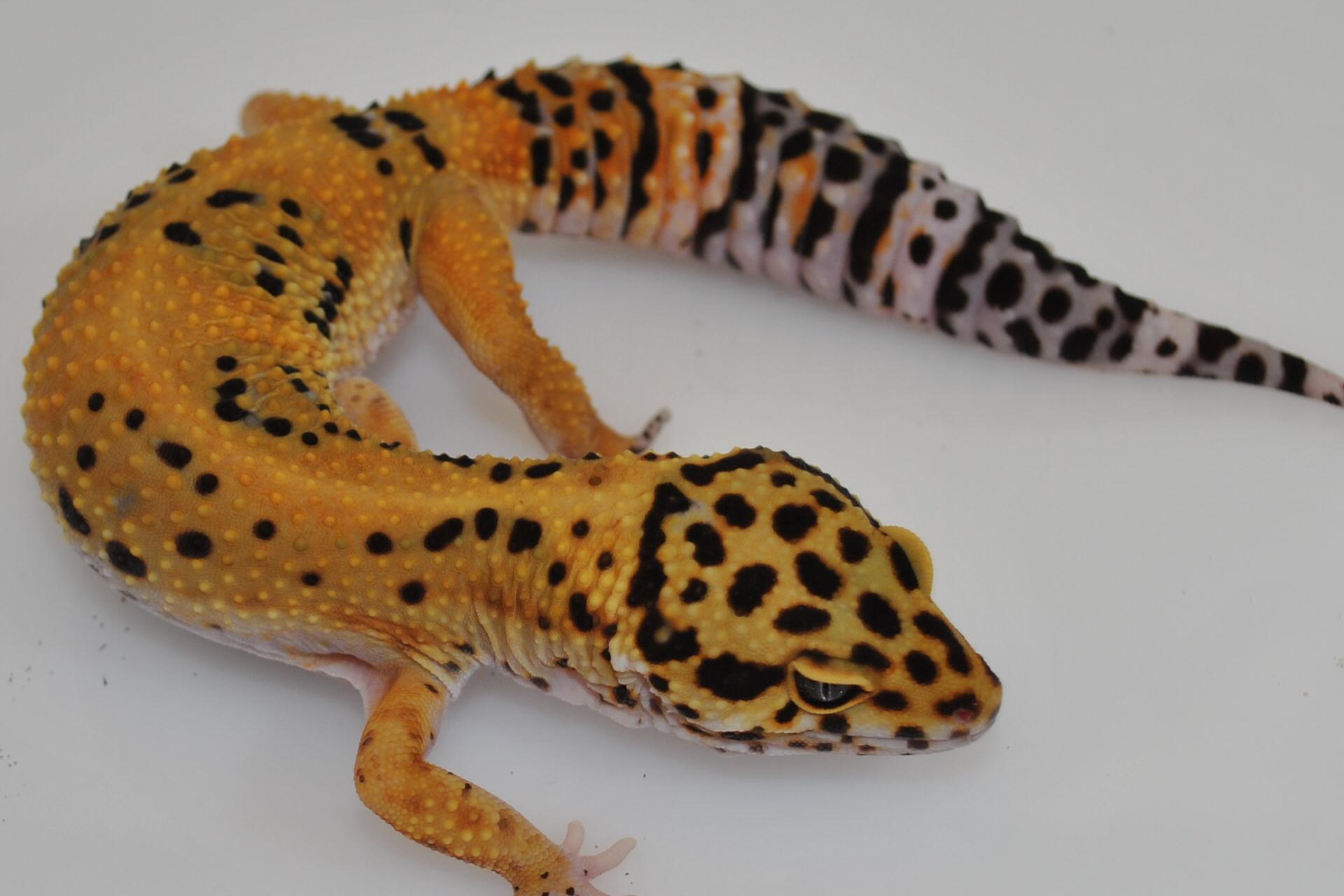 Marc Hensel farbformen